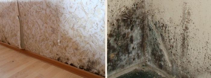 Ужасное состояние стен в доме