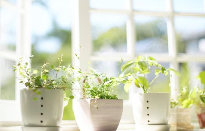Домашняя атмосфера улучшается цветами