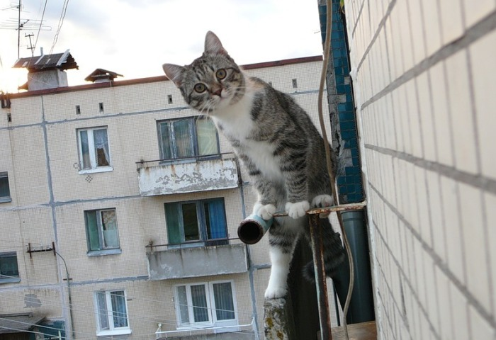 Кот осматривает территорию балкона