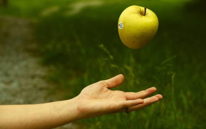 Большое яблоко вкусного сорта